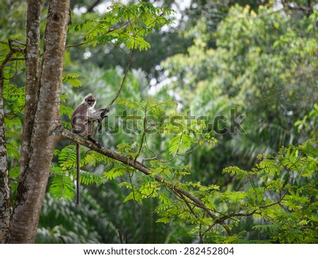 Tropical rainforest with a monkey sitting on a tree - stock photo