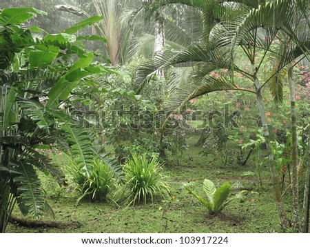 Tropical rainforest with rain in Costa Rica - stock photo