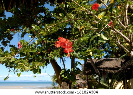 Tropical red flowers, and vegetation in the island of Nosy Be, Madagascar - stock photo