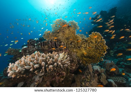 Tropical reef and fish in the Red Sea