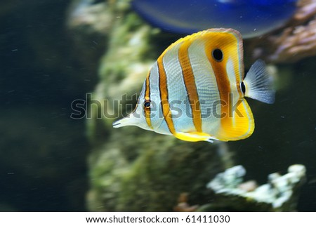 Tropical reef fish isolated, black background