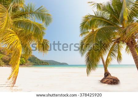 Tropical sandy beach - stock photo