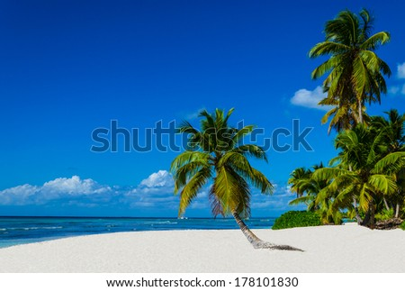 Tropical sandy beach with palm trees, Dominican Republic in Caribbean
