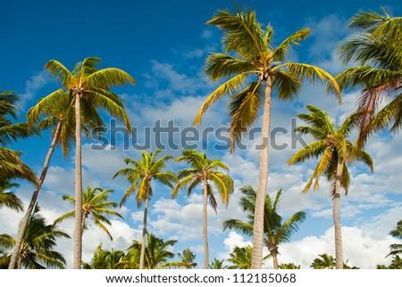 Tropical scene - stock photo