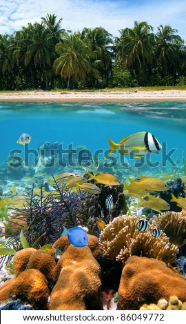Tropical scene above and under water with beach sand and coconut trees, underwater part, colorful fish in a coral reef, Caribbean sea - stock photo