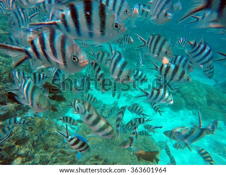 Tropical sea, Scuba Diving at Bora Bora, French Polynesia - stock photo