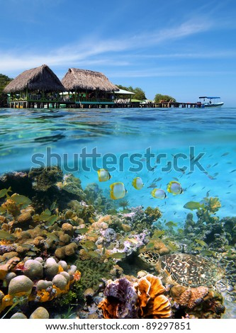 Tropical sea split view of a Caribbean bar restaurant over the water, underwater part a colorful coral reef with a shoal of fish and a green sea turtle, Crawl Cay, Bocas del Toro, Panama - stock photo