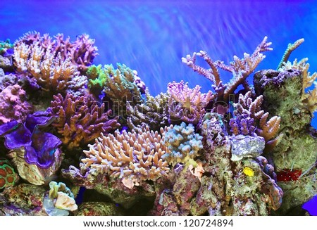 Tropical sea underwater with coral reefs and fish - stock photo