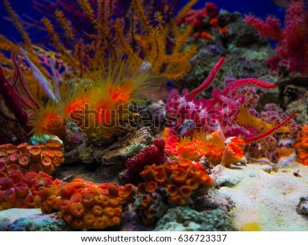 Tropical sea underwater with coral reefs and fish.