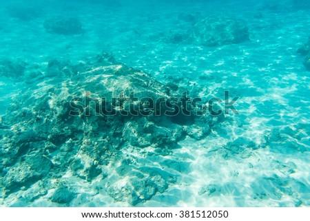 Tropical see life view near Similan islands, Thailand - stock photo