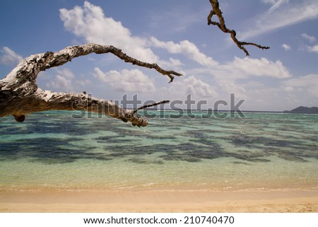 Tropical see with dead tree, La Digue, Seychelles - stock photo