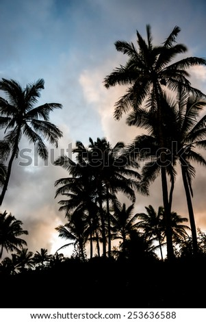 Tropical silhouette in Hawaii - stock photo