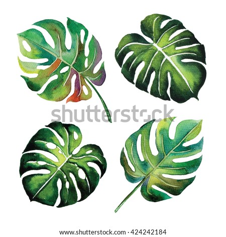 tropical Split Leaves plant botany watercolour object leaf painting on white background illustration - stock photo