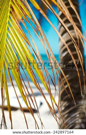 Tropical summer beach with palm leaf tree branch  sea and sky background - stock photo