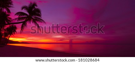 Tropical sunset with palm tree silhouette panorama - stock photo