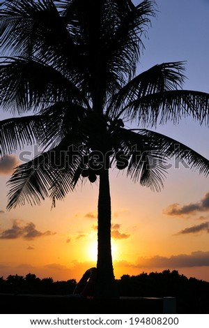Tropical sunset with red sky, clouds and coconut tree silhouette - stock photo