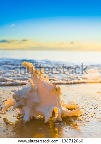 Tropical Symbol Evening Shore