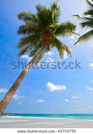 Tropical tree on exotic beach on blue sky background