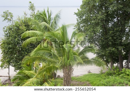 Tropical trees at Punta Leona Beach in Costa Rica - Puntarenas province, Central Pacific Coast - stock photo