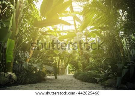 Tropical trees in botanical garden. - stock photo