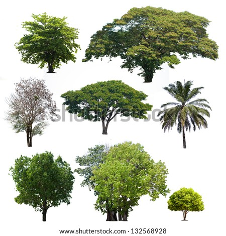 Tropical  trees isolate on white background - stock photo