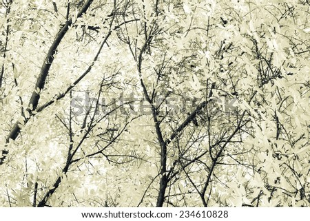 Tropical treetop in monotone color - stock photo