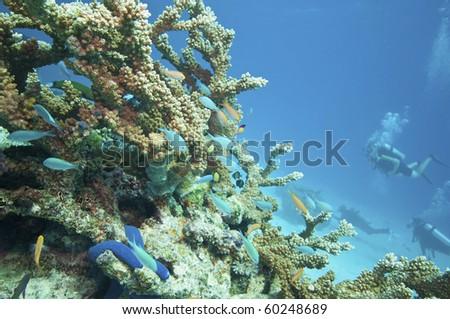 Tropical underwater scenery, Great barrier reef - stock photo