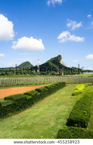 Tropical Vineyard and Mountain Background