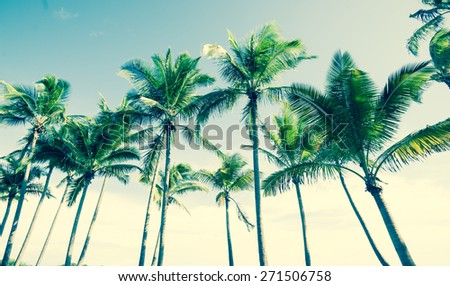tropical vintage palm image, row of several palms from low angle.