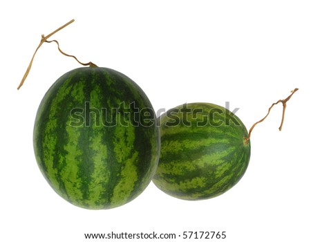 Tropical watermelon fruits