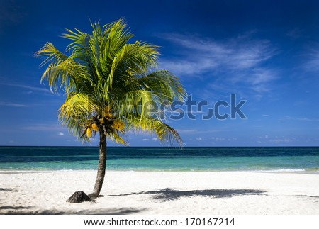 Tropical white sand beach with coconut tree, deep blue sky and turquoise  waters