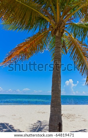tropical white sand beach with palm tree - stock photo