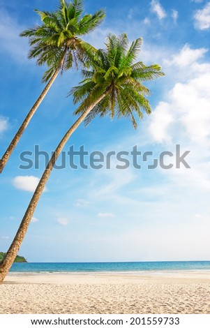 Tropical white sand with palm trees at Koh Kood, Thailand