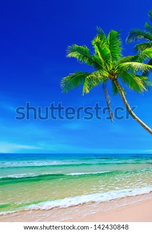 Tropical white sand with palm trees on the beach Koh Kood, Thailand - stock photo