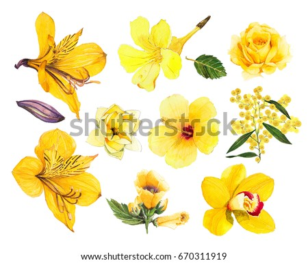 Tropical yellow flower alstroemeria yellow trumpet stock tropical yellow flower alstroemeria yellow trumpet rose orchid wattle magnolia hibiscus mightylinksfo