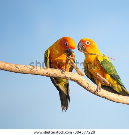 Tropical yellow parrot with green wings, sitting on a wood stick.