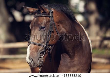 Trotter horse - stock photo