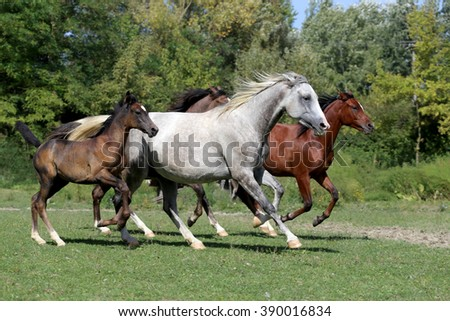 Trotting mares and foals in the meadow  - stock photo