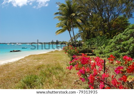 Trou aux biches beach with flowers and palm trees on Mauritius island - stock photo
