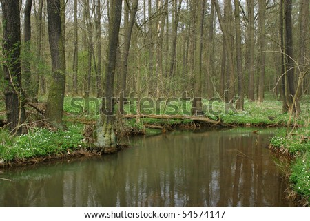 Trout brook Rossel in Saxony-Anhalt / Germany