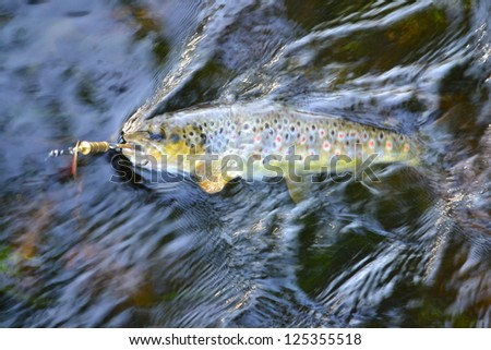 trout caught on a lure in the river