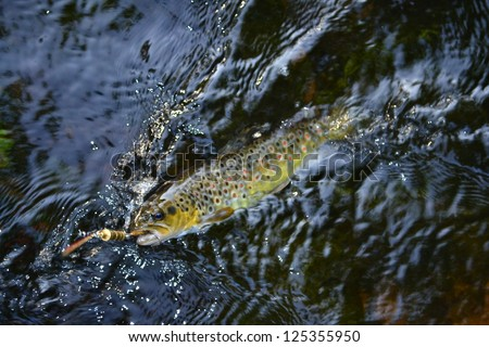trout caught on artificial bait in the river - stock photo