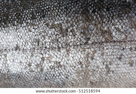 Trout fish scale texture