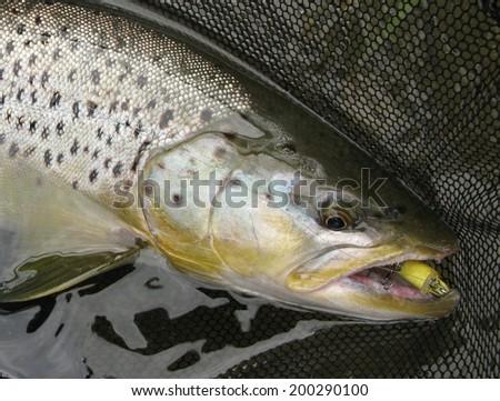 Trout fishing - stock photo