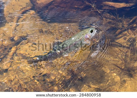 Trout fishing out of water