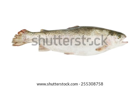Trout isolated on white background - stock photo