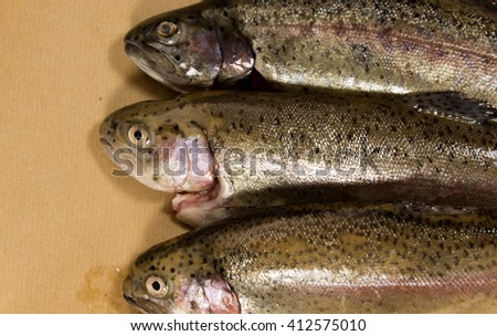 trouts on brown paper
