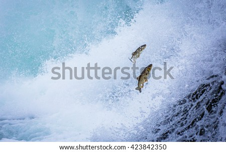 trouts upstream against the current  - stock photo