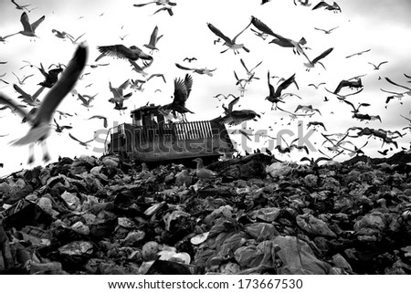 Truck working in landfill with birds in the sky - stock photo