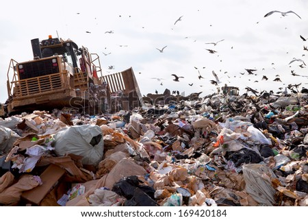 Truck working in landfill with birds looking for food